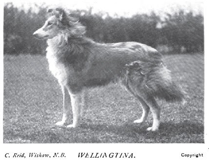 1899_collierough2